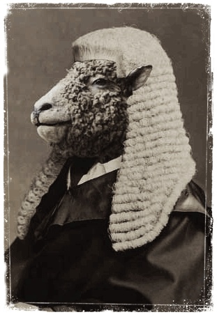sheep as judge