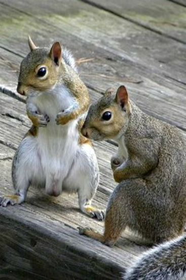crazy squirrels